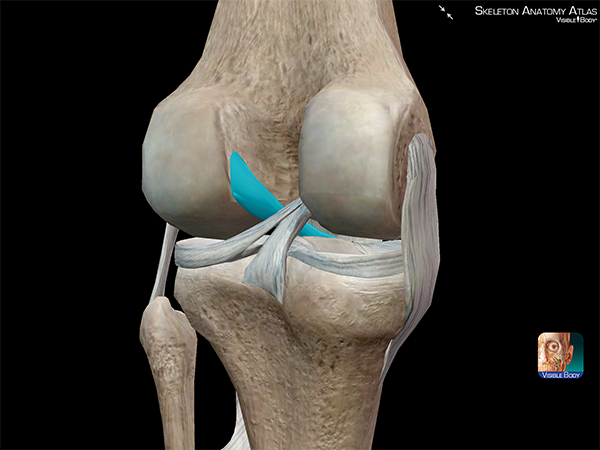 Fisioterapeuta Luís Miguel Brazão Gouveia: Common Ligament Injuries ...