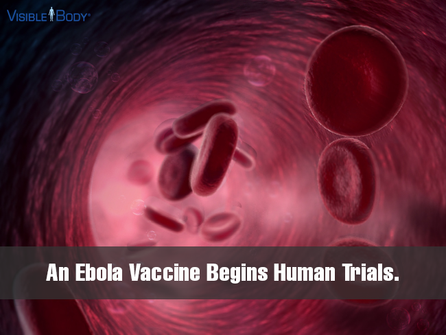 Ebola-vaccine-begins-human-trials