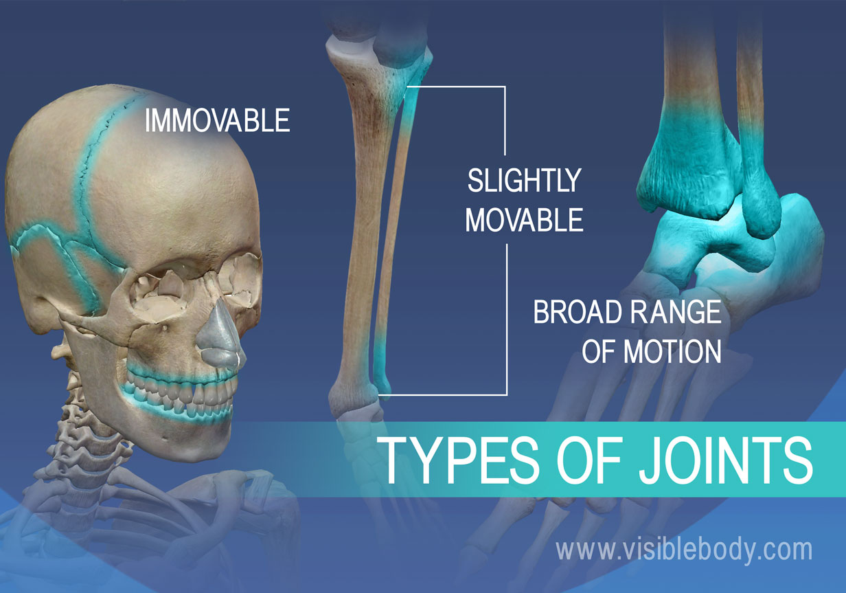 Learn Skeleton Anatomy