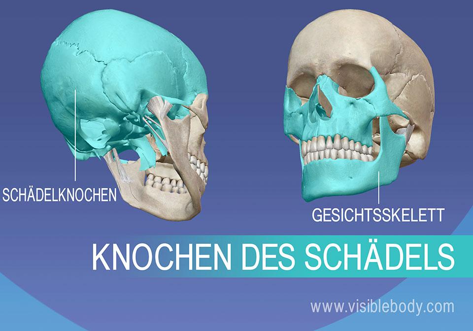 Whack-A-Bone - Anatomy Arcade