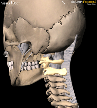 what is the relationship between atlas and axis of spine