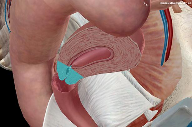 Penis Go In Vagina 90