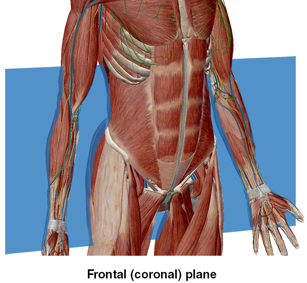 Directional Terms Anatomical Position Major Body Regions in addition Afnimarkers besides Introductiontoanatomy BranchesofAnatomy together with Anatomical Position Terms Game as well Ushas Anatomy Notes. on anatomical planes of brain