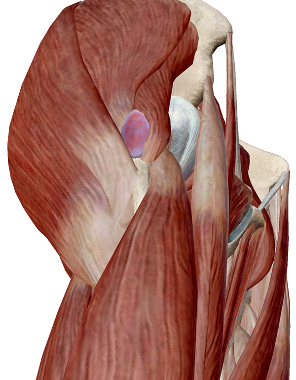 Hip-Pathology-3.png