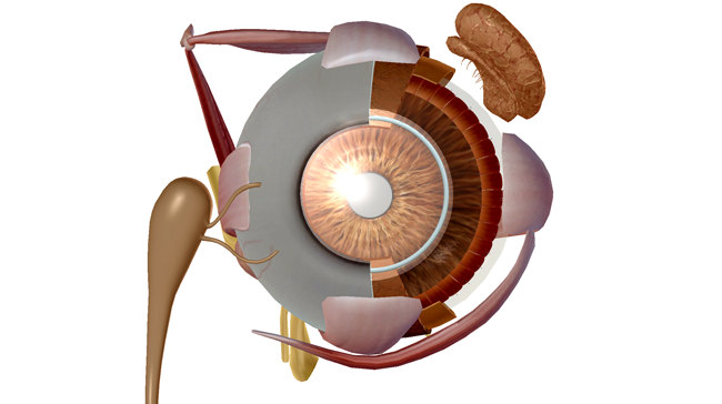 Melt-Away-Cataracts-Lanosterol.png