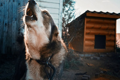 dog-1663979_640.jpg