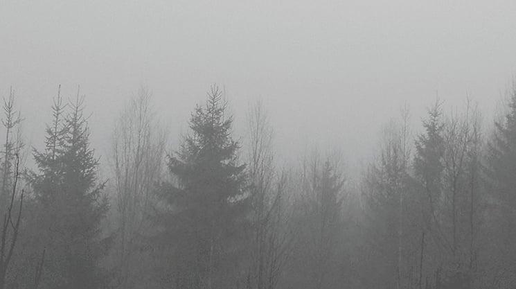 skog-natt-oktan-oslo