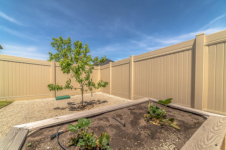 Plant These Trees If You Have a Small Backyard