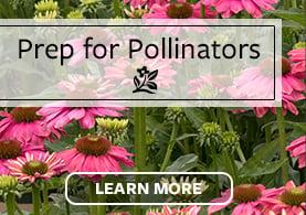 NTT Pollinators Test