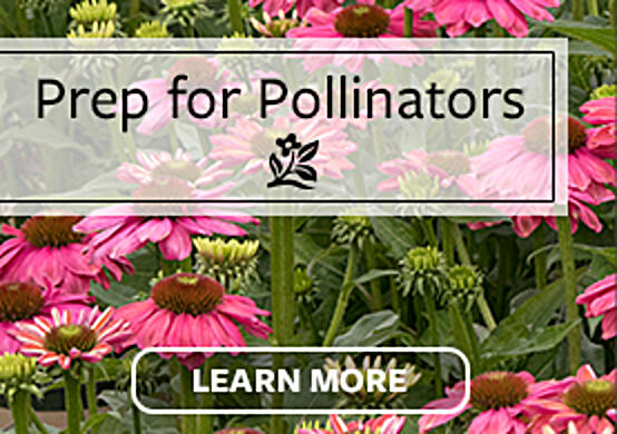 NTT Pollinators Test