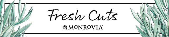 Fresh Cuts: Monrovia's Monthly Newsletter