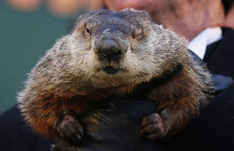 Will Punxsutawney Phil Be Right...an Early Spring?