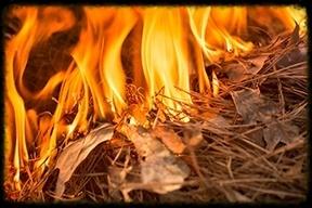 BrushFire-383213-edited.jpg