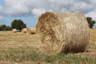 Hay_in_the_Field