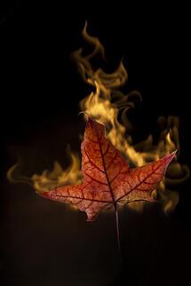 photodune-1217135-yellow-autumn-leaf-in-fire-on-black-xs