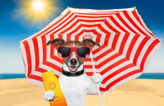 dog-summer-sunscreen-xs