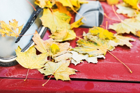 leaves-on-red-car-hood-xs