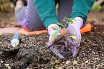 photodune-1327353-gardening-xs