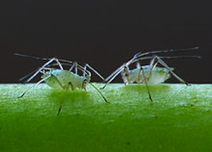 Summer Pests Plaguing Atlanta Commercial Properties