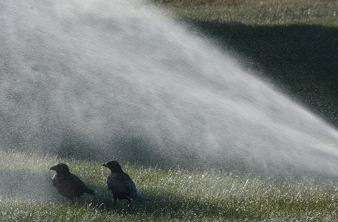 one of the advantages of sprinkler irrigation is large area coverage