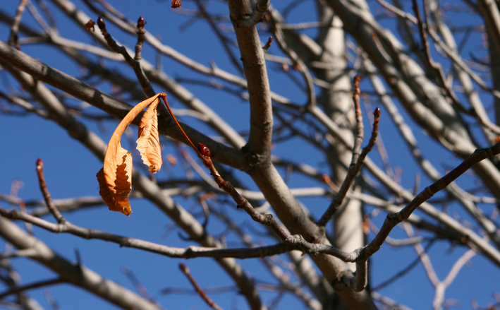 the best time to transplant trees is when they are dormant