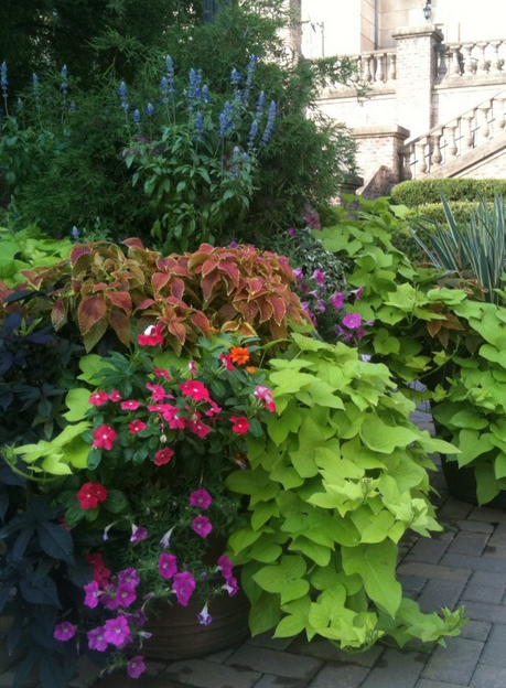 commercial landscape maintenance includes seasonal color