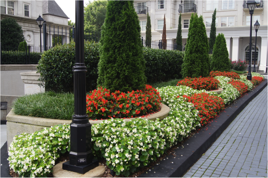 Atlanta commercial landscape plants