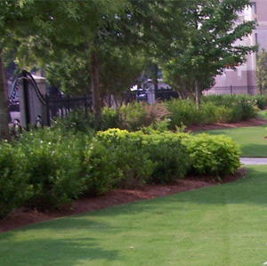atlanta commercial landscape tree care