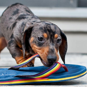 Chewing Sandal
