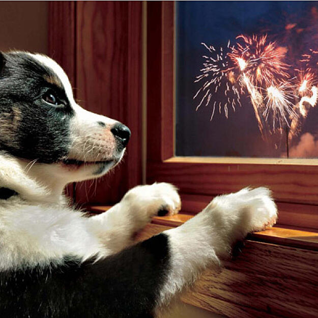 How to help your dog deal with fireworks