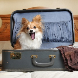 dog-excited-to-be-in-hotel-square