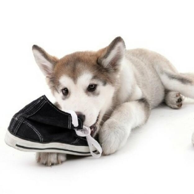how-to-stop-dogs-chewing