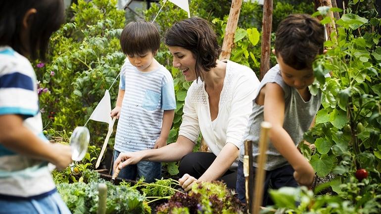 go-green-in-your-community-garden.jpg