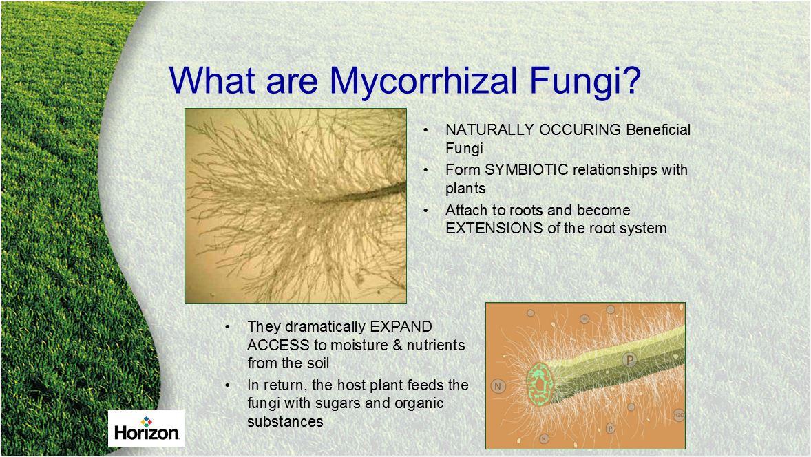 Endomycorrhizal... Endomycorrhizal