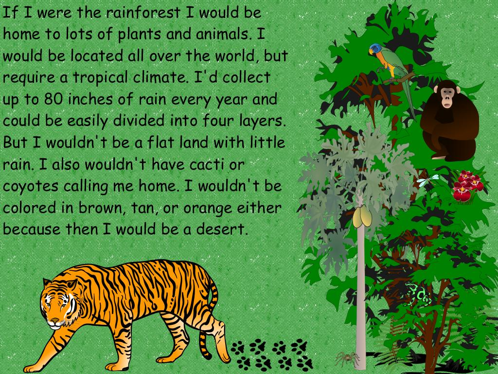 forest ecosystem essay