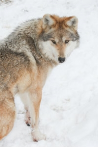 Can_Pharmacy_POS_Change_Your_Pharmacy_for_the_better_wolf-690520-edited