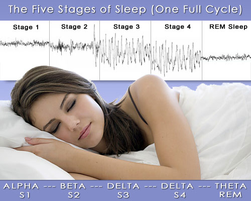 an overview of the stages of sleep Unlike most editing & proofreading services, we edit for everything: grammar, spelling, punctuation, idea flow, sentence structure, & more get started now.
