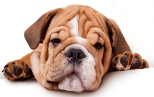 perro sin apetito