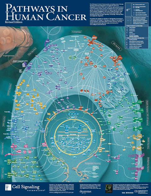 cell signaling 2015 Cell communication 2015 - download as pdf file (pdf), text file (txt) or read online.