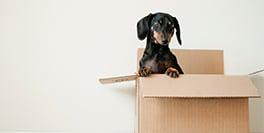How often do we actually move house?