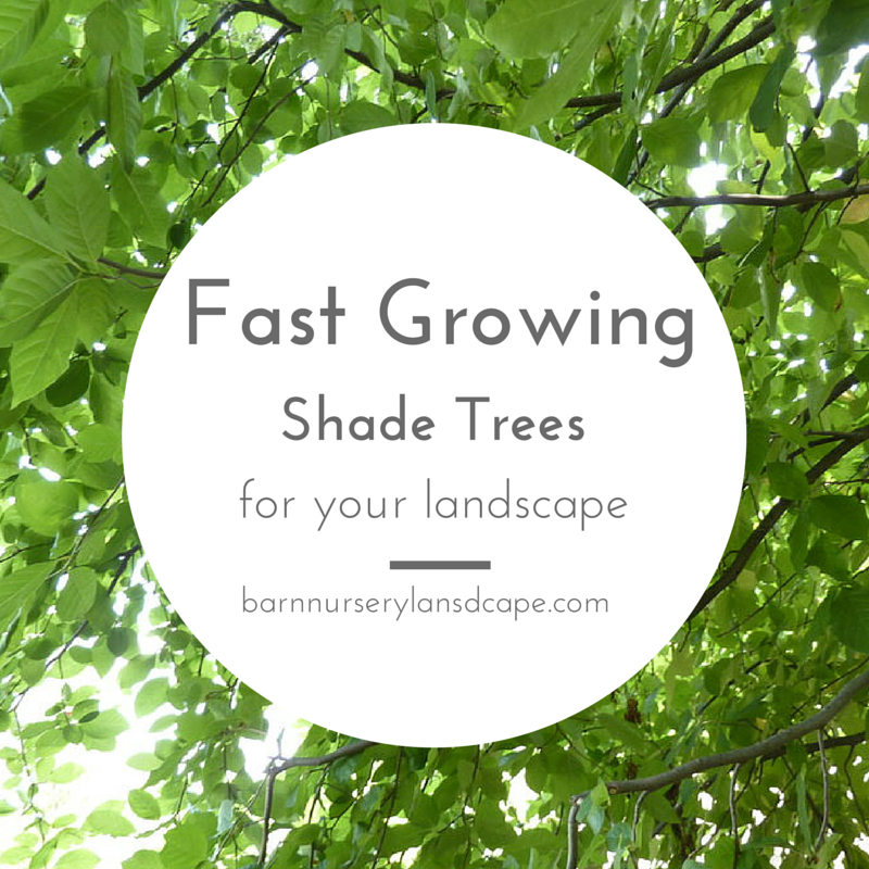 Dig it for Short trees that grow in shade