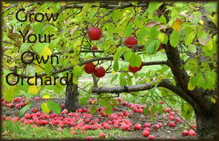apple orchard grow your own fruit trees & pollinators,Home Orchard Design