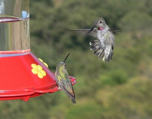 The Best Plants To Attract Hummingbirds
