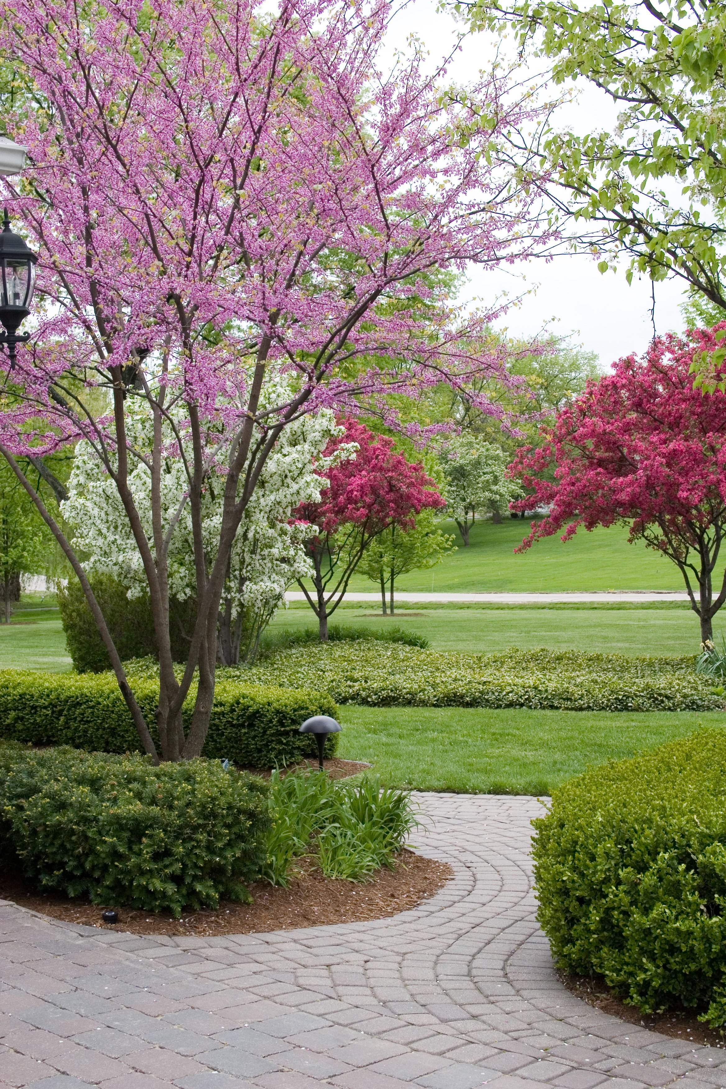 Image gallery ornamental trees for landscaping for Ornamental landscaping