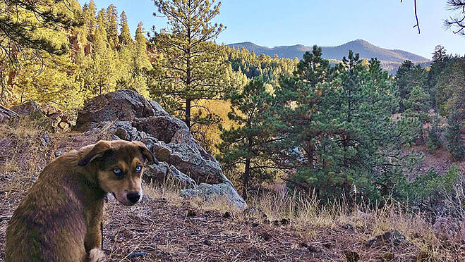 best dog friendly hikes in denver2