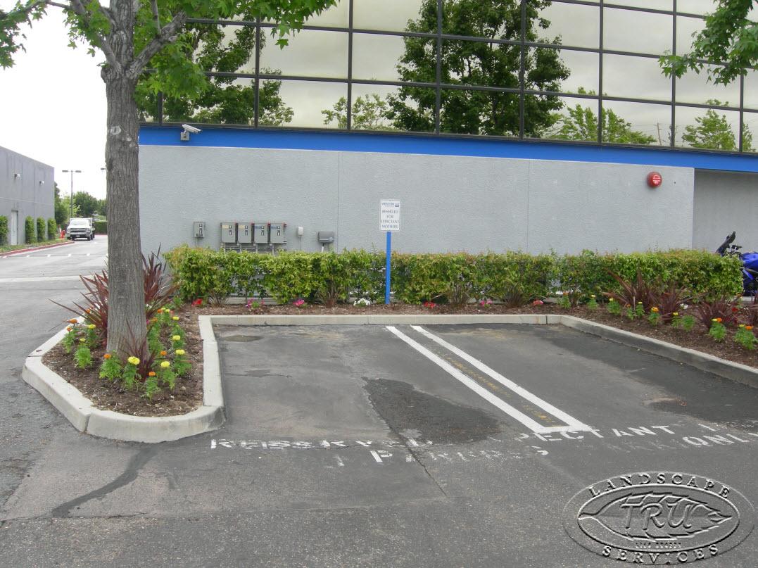 Guest Blogger Trulandscape On Tips For Parking Lot Irrigation