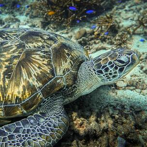celebrate world turtle day - photo by James Thornton via unsplash