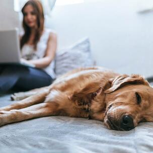 celebrate take your dog to work day - photo by Bruno Cervera via unsplash