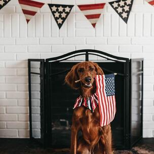 Celebrate Independence Day in the US - photo by Camylla Battani via Unsplash