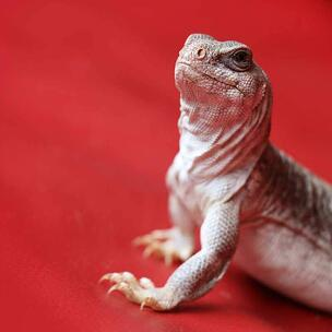 celebrate reptile awareness day - photo by Pierre Bamin via unsplash